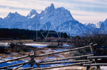 A moose grazes in front of the Grand Tetons.
