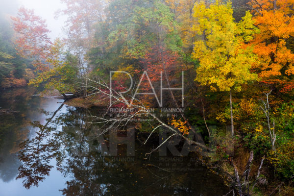 mohican_state_park_sound_recording_dawn